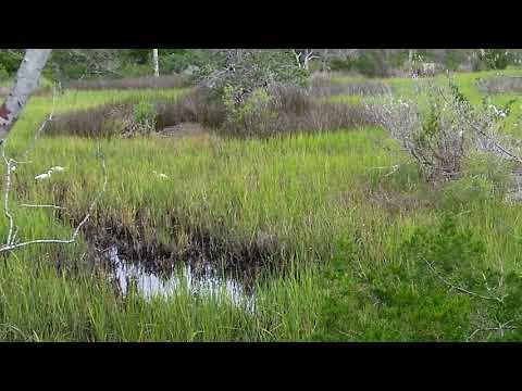 Wild life at  Castaway Island Preserve, Jacksonville Fl