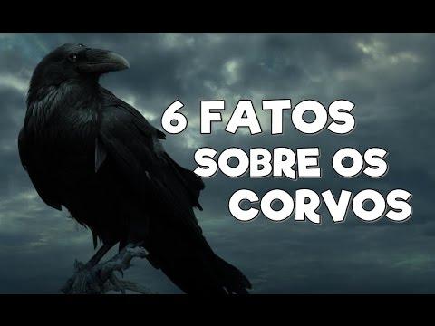 6 FATOS SOBRE OS CORVOS