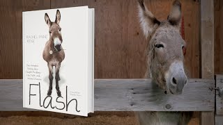 Flash, The Homeless Donkey Who Taught Me About Life, Faith, and Second Chances