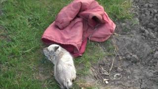 Кошка впервые на природе