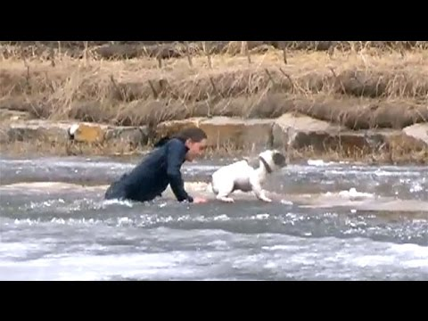 On thin ice: Alberta man jumps into icy pond to rescue dog