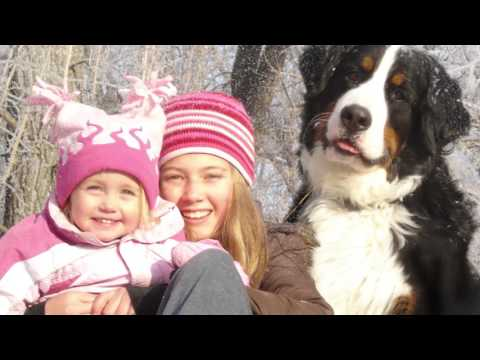Our Sehr Bear | A Beautiful Soul Bernese Mountain Dog Tribute | 8.21.08 - 4.10.17