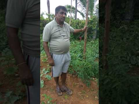 Kumaraswamy a ZBNF famer's Profit 24 lakhs for 2 acres from Vegetable Production