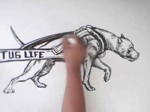 Freestyle Art : American Pit Bull Terrier V