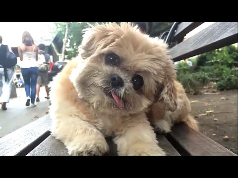 Only Puppies - Compilation video of puppies