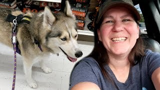shelby-the-husky-day-trip-with-mom