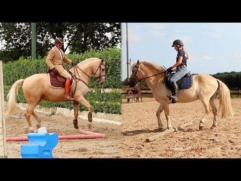 Wordt Moos ook een Working Equitation paard? | Weekendvlog #115