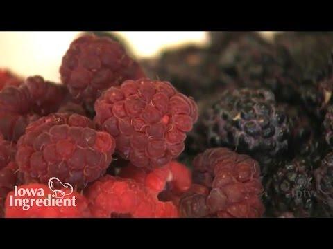Growing Raspberries   Iowa Ingredient