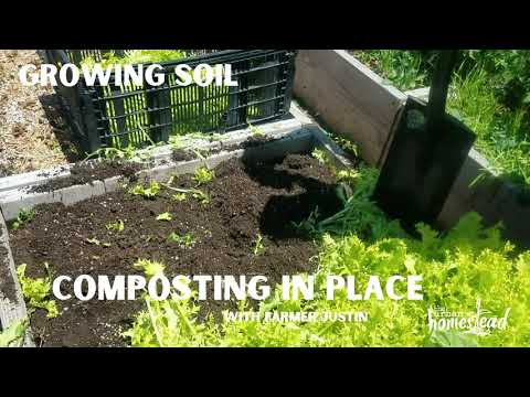 Growing Soil (Composting in Place) - Urban Homestead