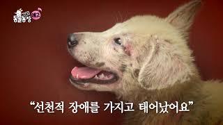 SBS [TV 동물농장] - 18년 10월 21일(일) 888회 예고 /