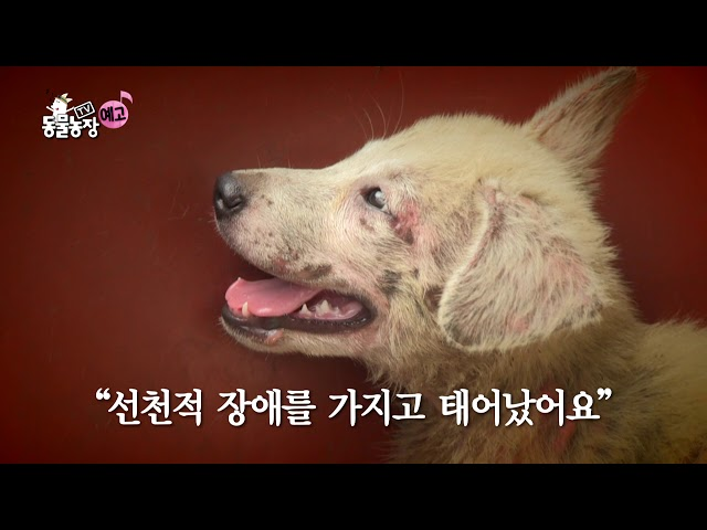 SBS [TV 동물농장] - 18년 10월 21일(일) 888회 예고 / 'Animal Farm' Ep.888 Preview