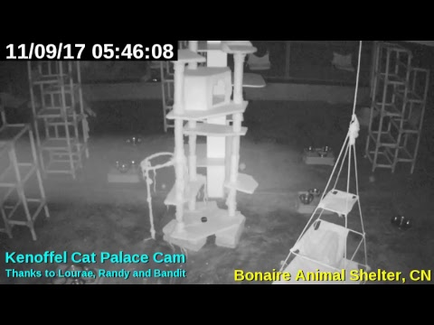 Animal Shelter Bonaire - Cat Palace