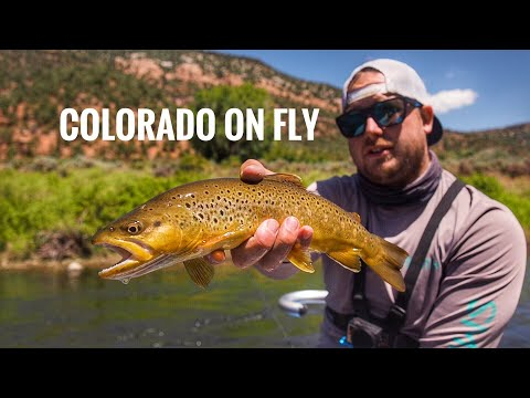 Fly Fishing Colorado. Dry Fly's And A Broken Fly Line