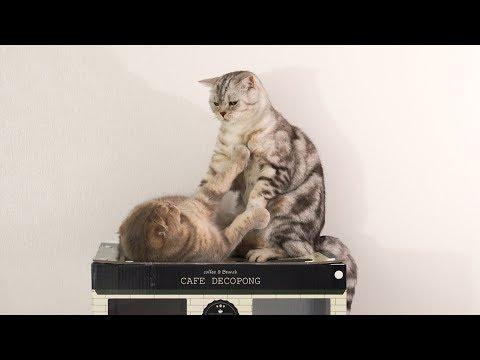 귀엽게 자리싸움하는 고양이들 이즈와 소울