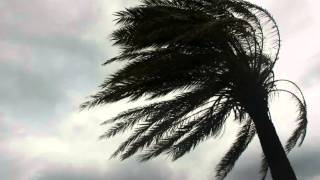 south florida wind insurance