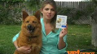 Interceptor for Dogs and Cats - Pet Medications