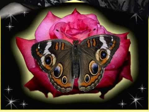 Melly Goeslaw feat.Andhika  Pratama-Butterfly.wmv