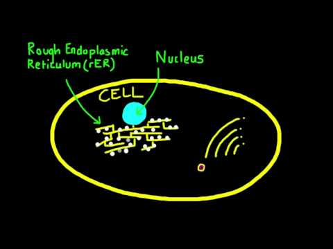 2.4.7 Explain how vesicles are used to transport materials within a cell