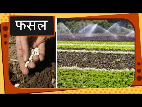 Introductory Crop Science