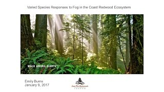 Varied species responses to fog in the coast redwood ecosystem
