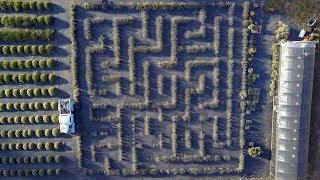 Wayward Winds Lavender Farm Drone Video