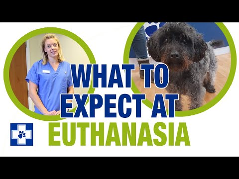 What to expect at euthanasia
