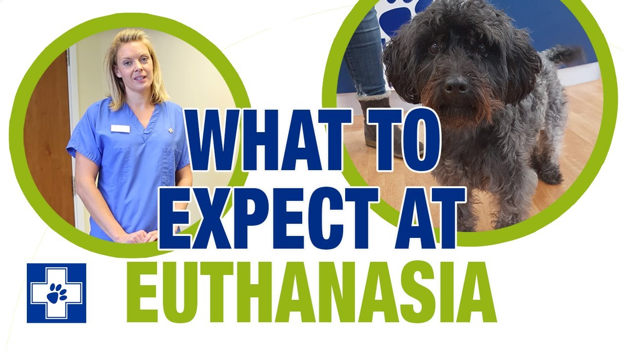 What To Expect At Euthanasia White Cross Vets