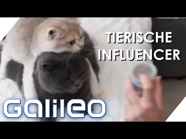 Petfluencer werden: So verdienen tierische Influencer viel Geld | Galileo | ProSieben