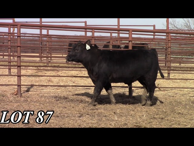 Mead Angus Farms Lot 87