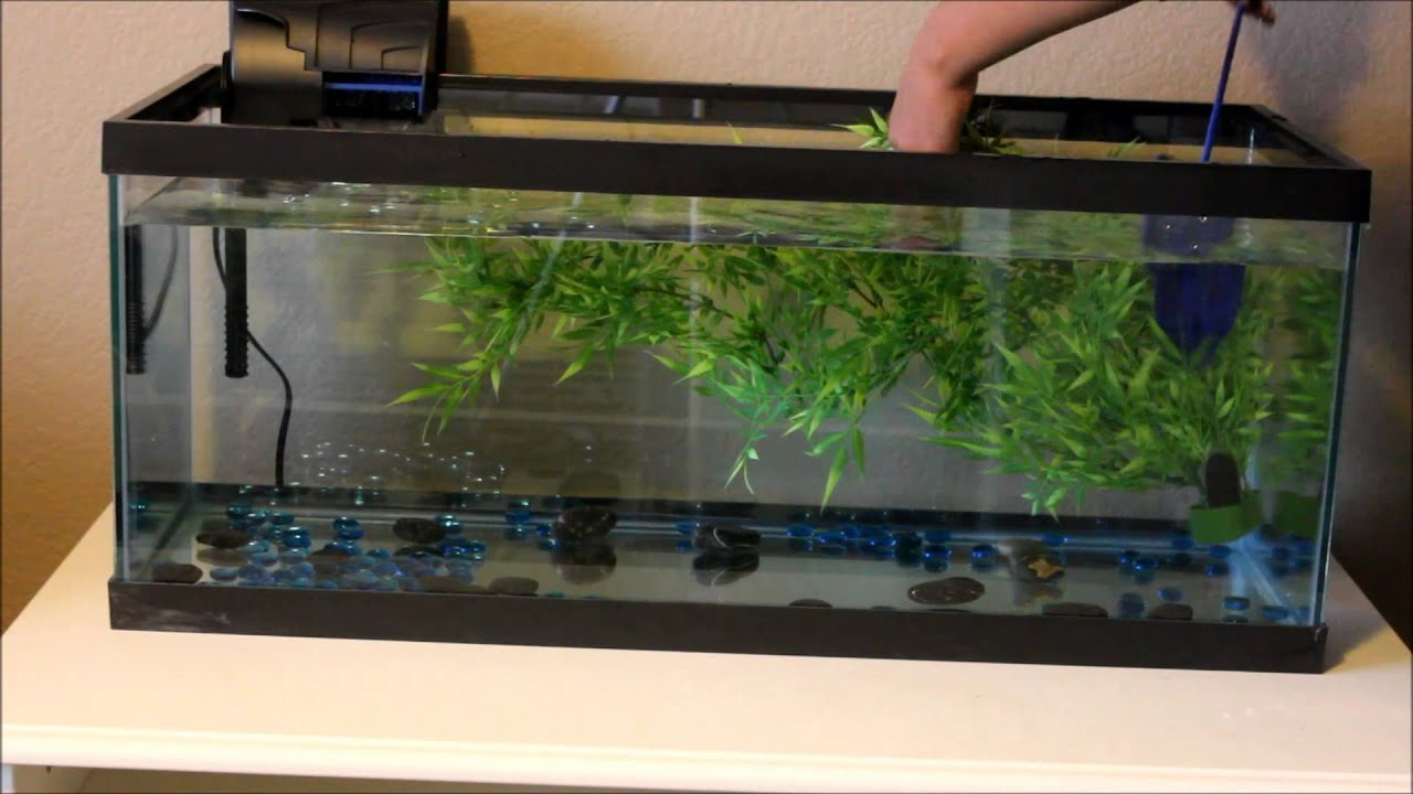 Setting up new 20 gallon fish tank youtube for 20 gallon fish tank size
