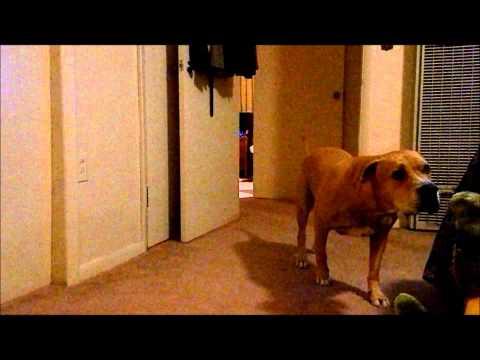 כלב חמקמק וערמומי