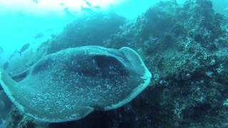 видео «Великий Мусорный День» RuDIVE – 2015