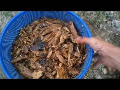 Gold Prospecting Adventures with Phil - Panning Natural Gold Traps for Paystreaks and Sparklies