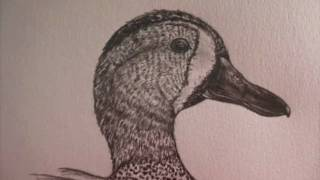 Detailed duck drawing and shading