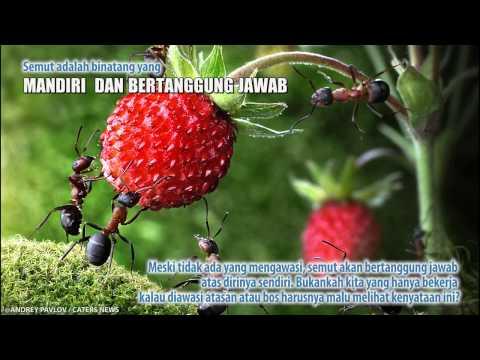 Motivasi Dari Semut Yang Rajin