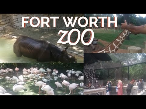 What's in the FORTWORTH ZOO? Ready for an Adventure. Check this out!