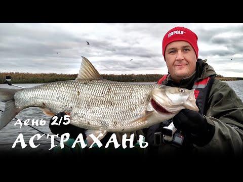 Астрахань. День 2.5. МОЙ ПЕРВЫЙ КРУПНЫЙ ЖЕРЕХ! | Рыбалка на спиннинг в Астрахани