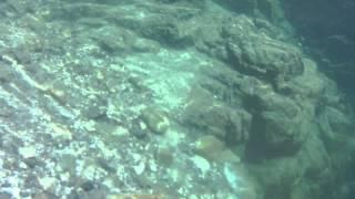 山口橋直下でシュノーケルした時の映像です.