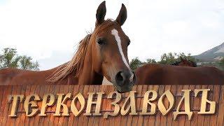 Терский племенной конный завод №169, история/Арабская лошадь, русские арабы/Экскурсия на ТерКонЗавод