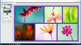So erstellen Sie eine Bild-Collage (Picasa 3)