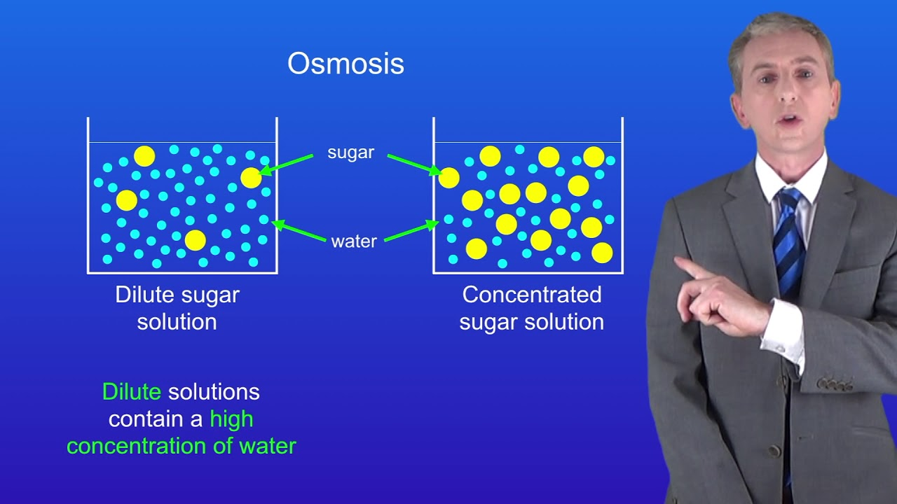 biology osmosis Osmosis is the diffusion of water across a partially permeable membrane from a dilute solution (high concentration of water) to a concentrated solution (low concentration of water) a partially permeable membrane allows water through, but won't let the larger molecules dissolved in water pass through.