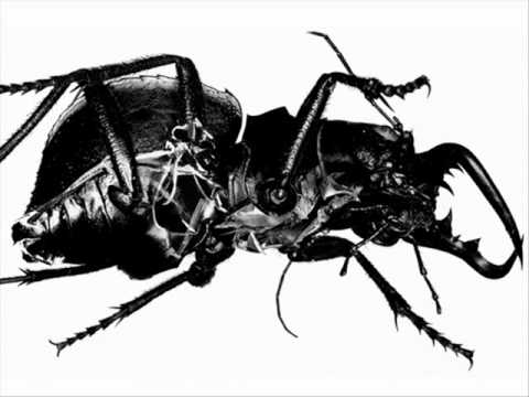 Massive Attack - Black Milk (Live Radio Session)