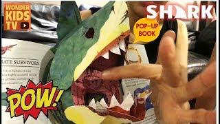 상어의 비밀 샤크어택 shark attack l shark pop up book l shark l secret of shark l sea monsters