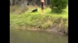 Dog Training Nz Teaching Your Dog To Swim.