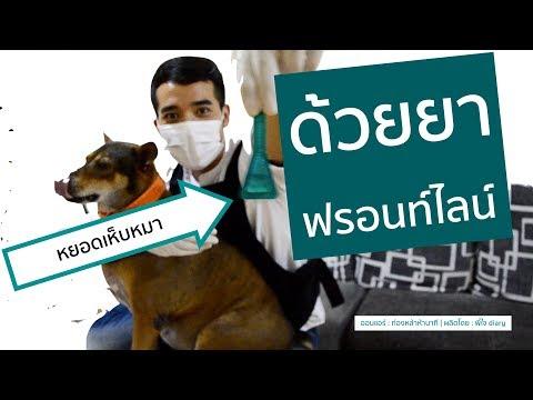 พี่ใจไดอารี่ : หยอดเห็บหมา Frontline Plus