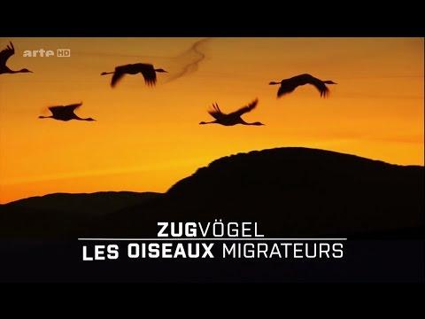 Les Oiseaux Migrateurs : Les Messagers Du Monde [HD]