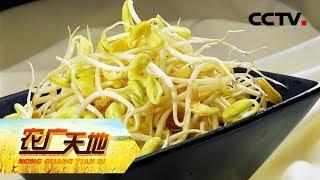 《农广天地》 20190718 小小芽苗菜 闯出大市场| CCTV农业