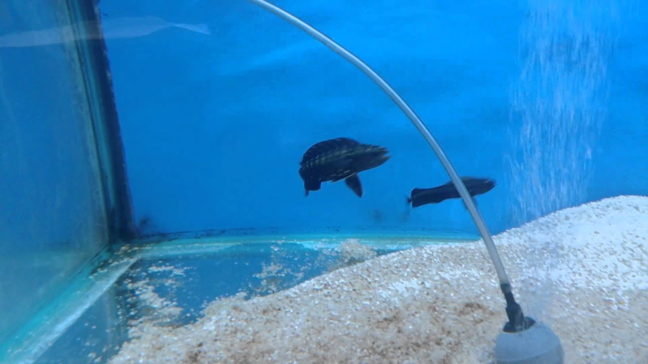 watch these crazy dolphin fish eating live food youtube