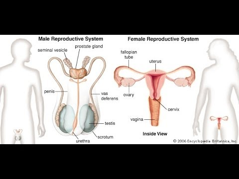 Intro. To The Reproductive System - YouTube