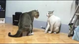 Когда у тебя 2 кота и тебя нет дома то: